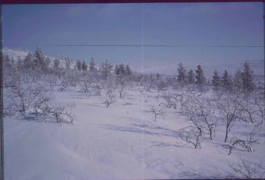 Ahopäältä Kiilopään suuntaan 11.3.1985