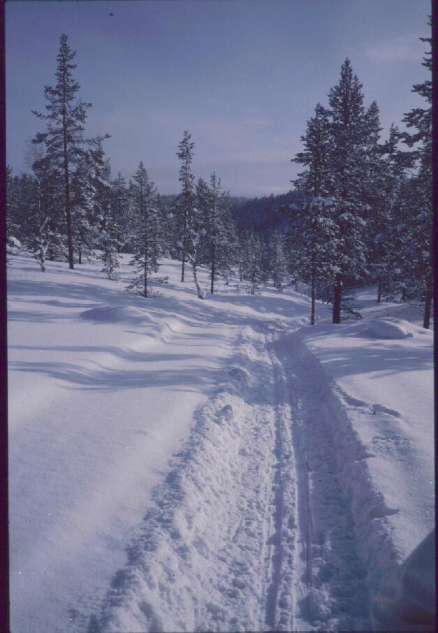 Tolosjoelta ylös kohti Harripäätä 14.3.1985