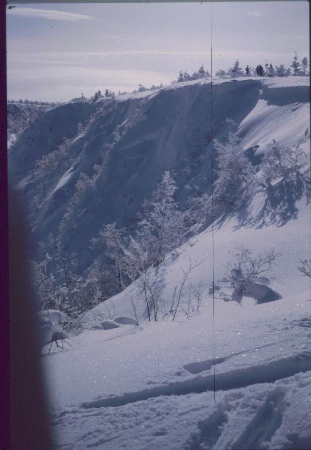 Harripään Kulmakuru 14.3.1985