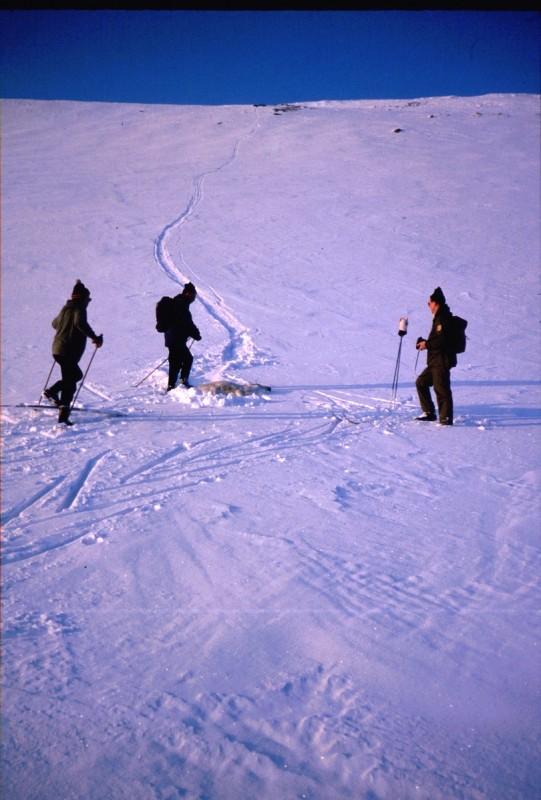 Poron kohtalo Kahperusvaarojen rinteellä 14.4.1984
