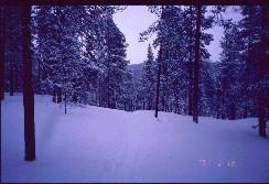 Suomunruoktulta kohti etelää 19.2.2001