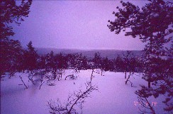 Vintilätunturin alarinteiltä 19.2.2001