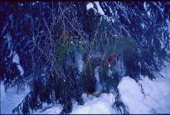 Reissun viimeinen majapaikka Tuiskukurussa 21.2.2001