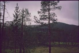 Sollanpää Muorravaarakanjoen takaa 24.7.1988