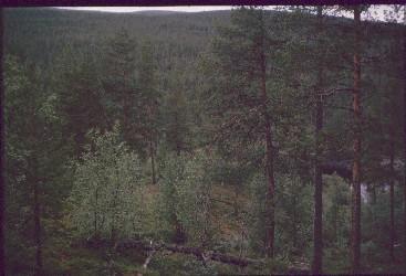 Morgam Viibukselta alas Kultasataman suuntaan  24.7.1989