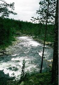 Suomuköngäs 25.7.1988