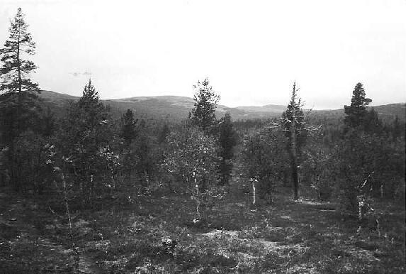 Luusuanvaaralta luoteeseen 28.8.1995