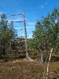 Alhaalta vastapäivään kiertyvä kelo Ratnoskaidilla 1.7.2005