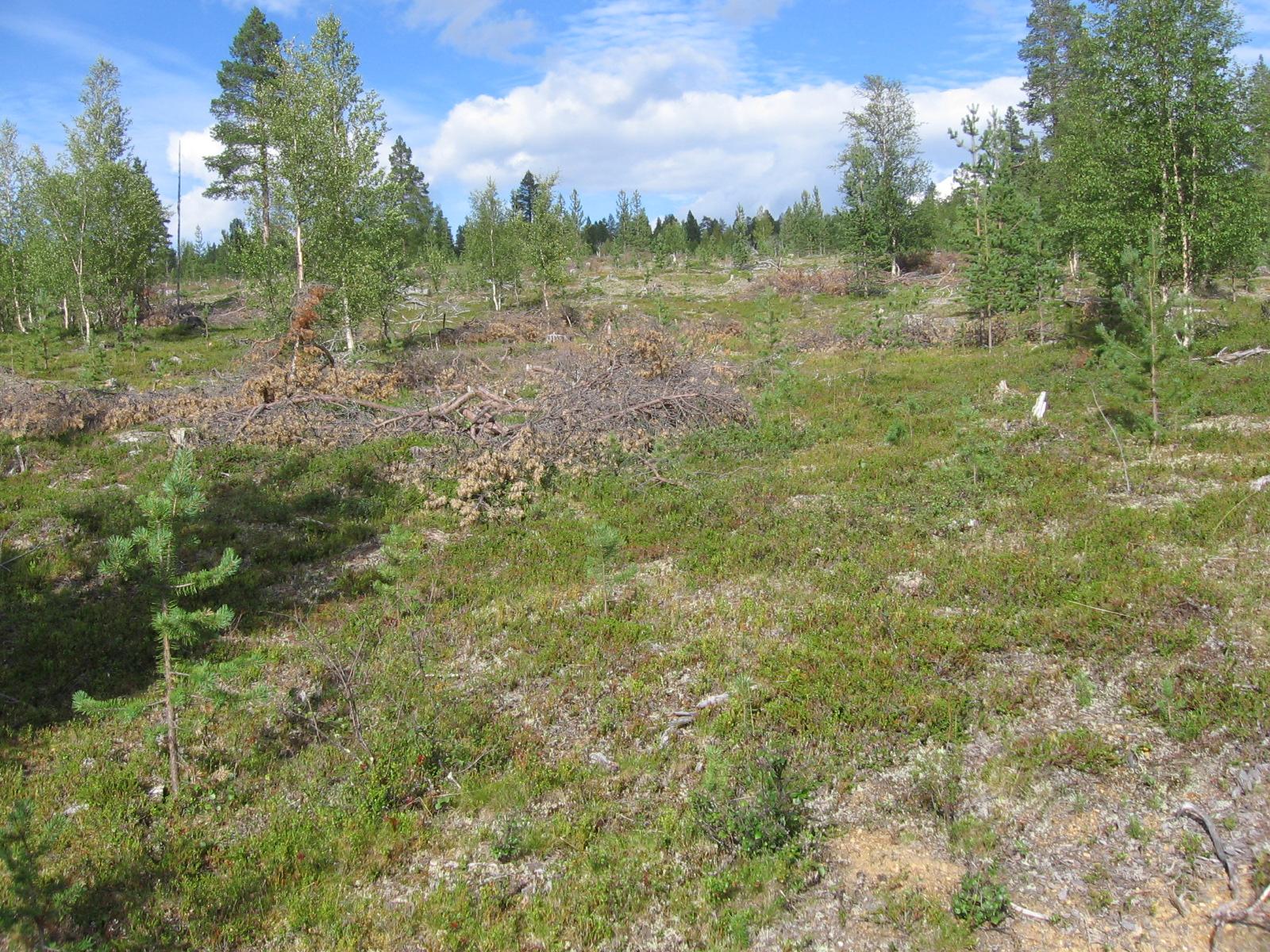Matkalla kohti Sompion kämppää 4.8.2010