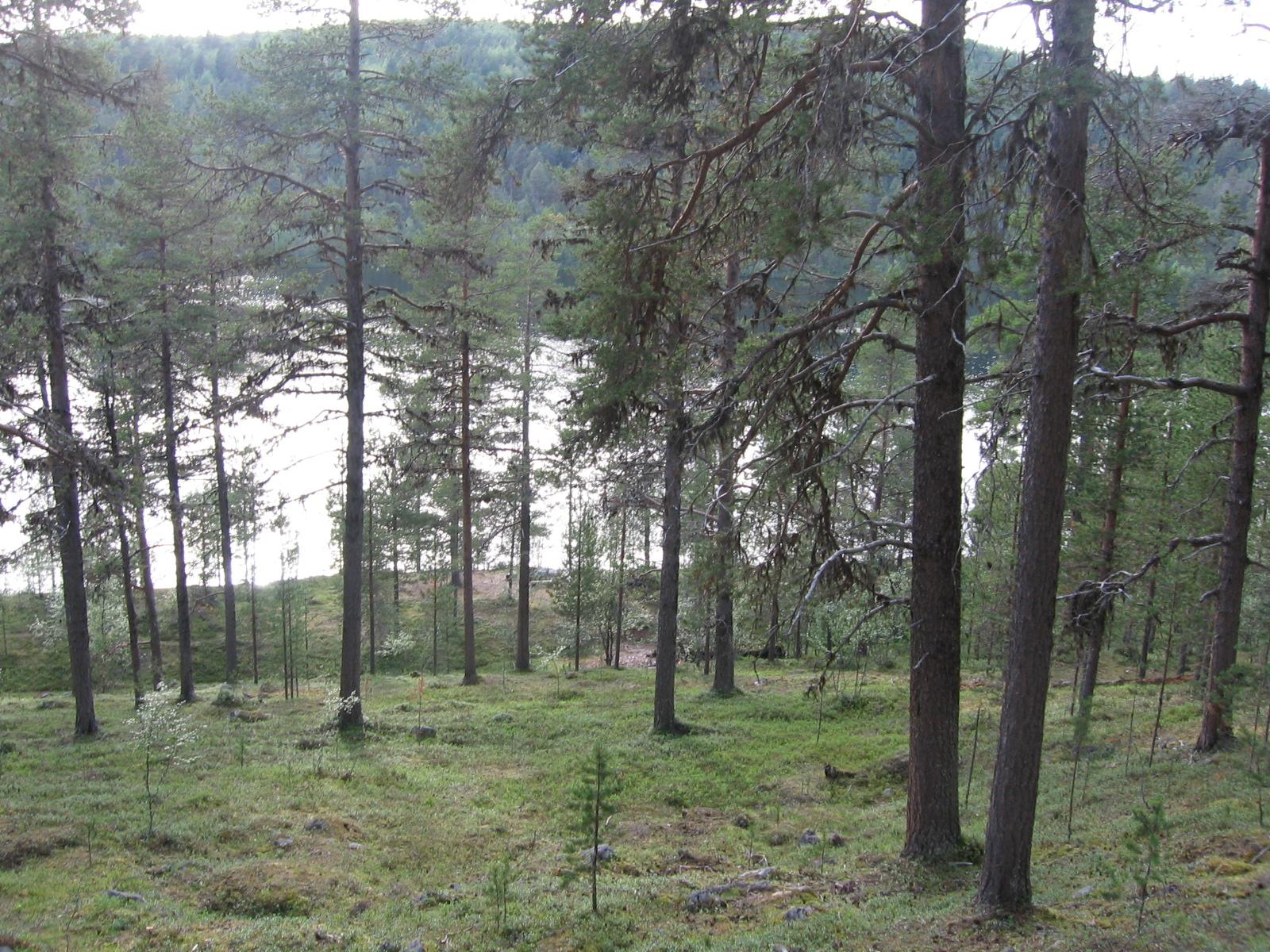 Illestipääjärvi 4.8.2010