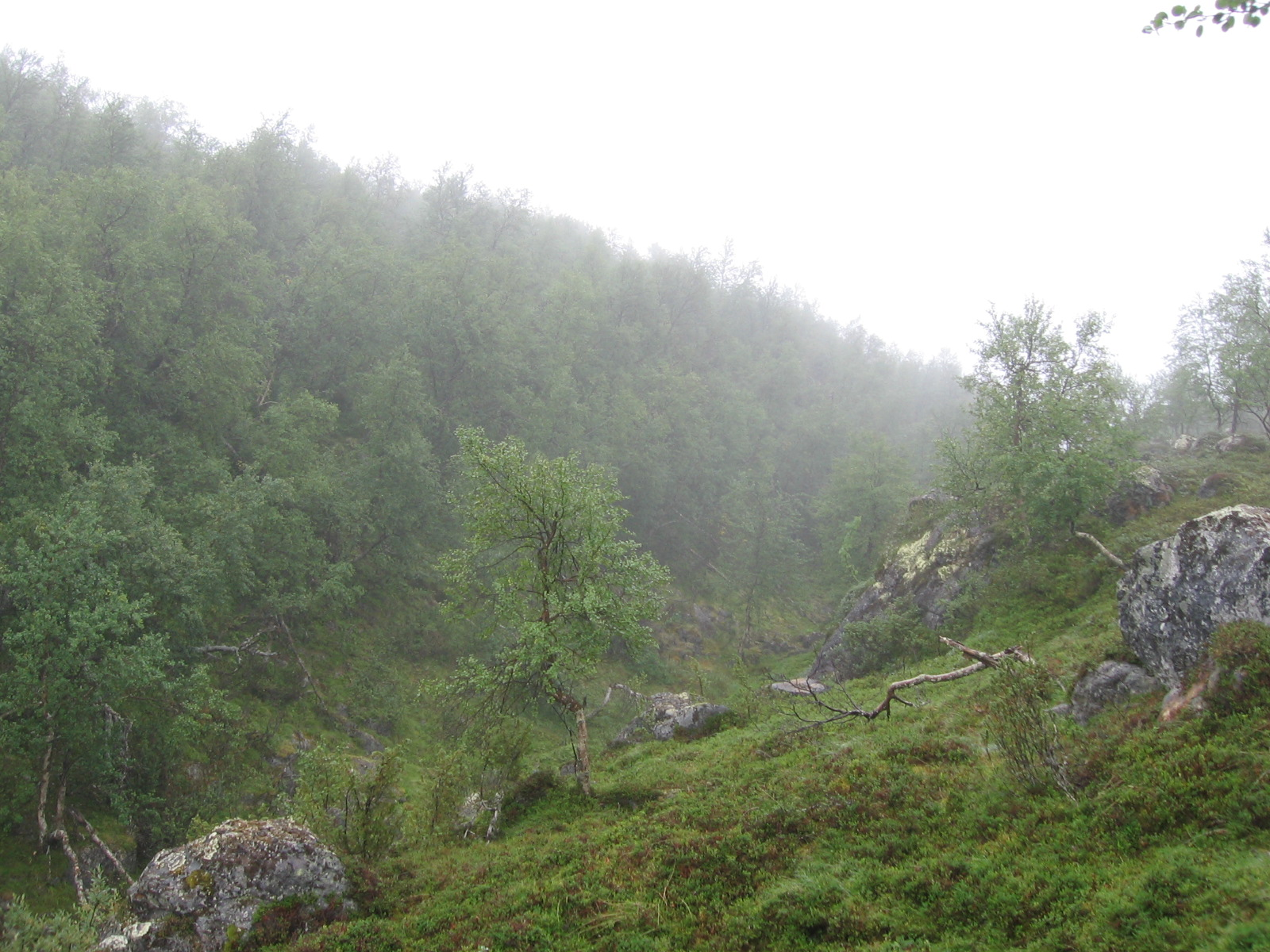 Kivipään ja Kuoppapään välinen laakso 5.8.2010