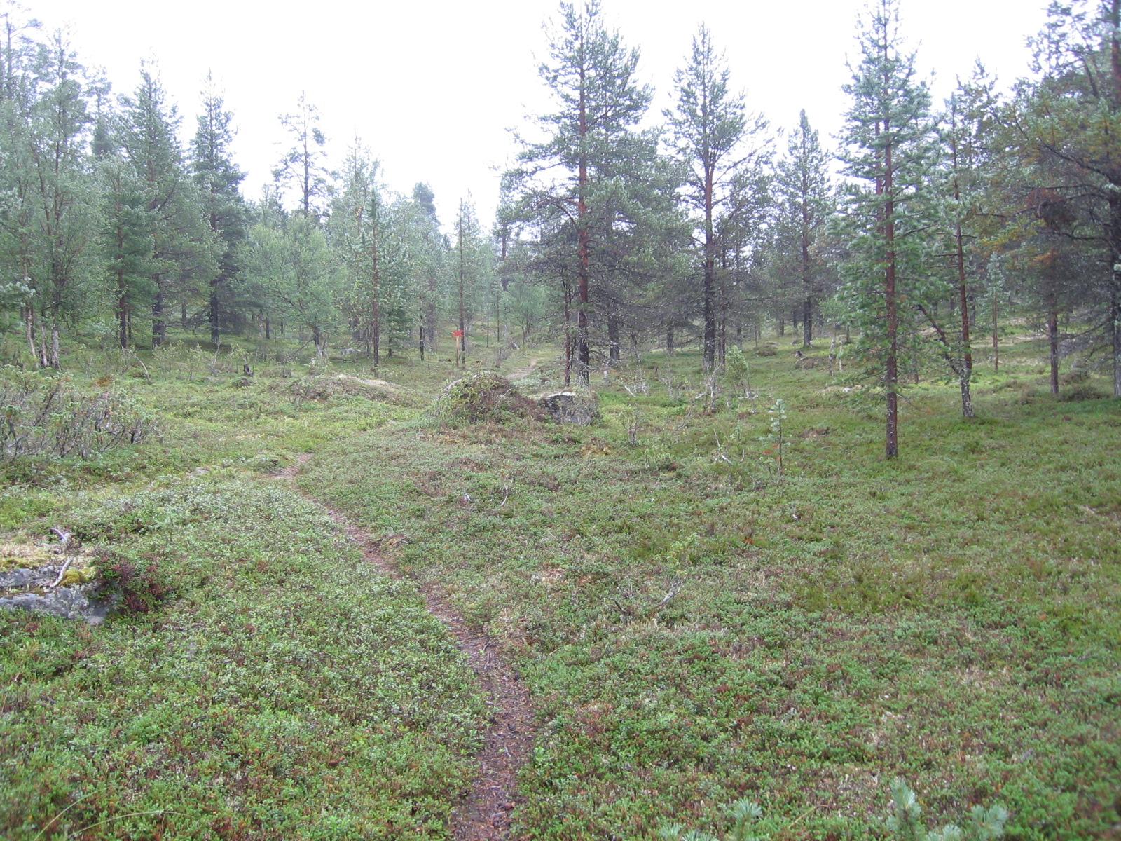 Moottorikelkkareitti Kuoppajärven ja Hammasjärven välillä 5.8.2010