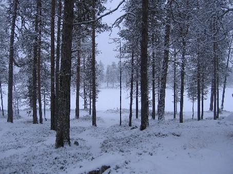 Lankojärvi 26.10.2006
