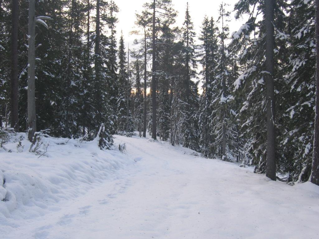 Ukko-Laavun ja Lampivaaran väliltä 15.10.2009