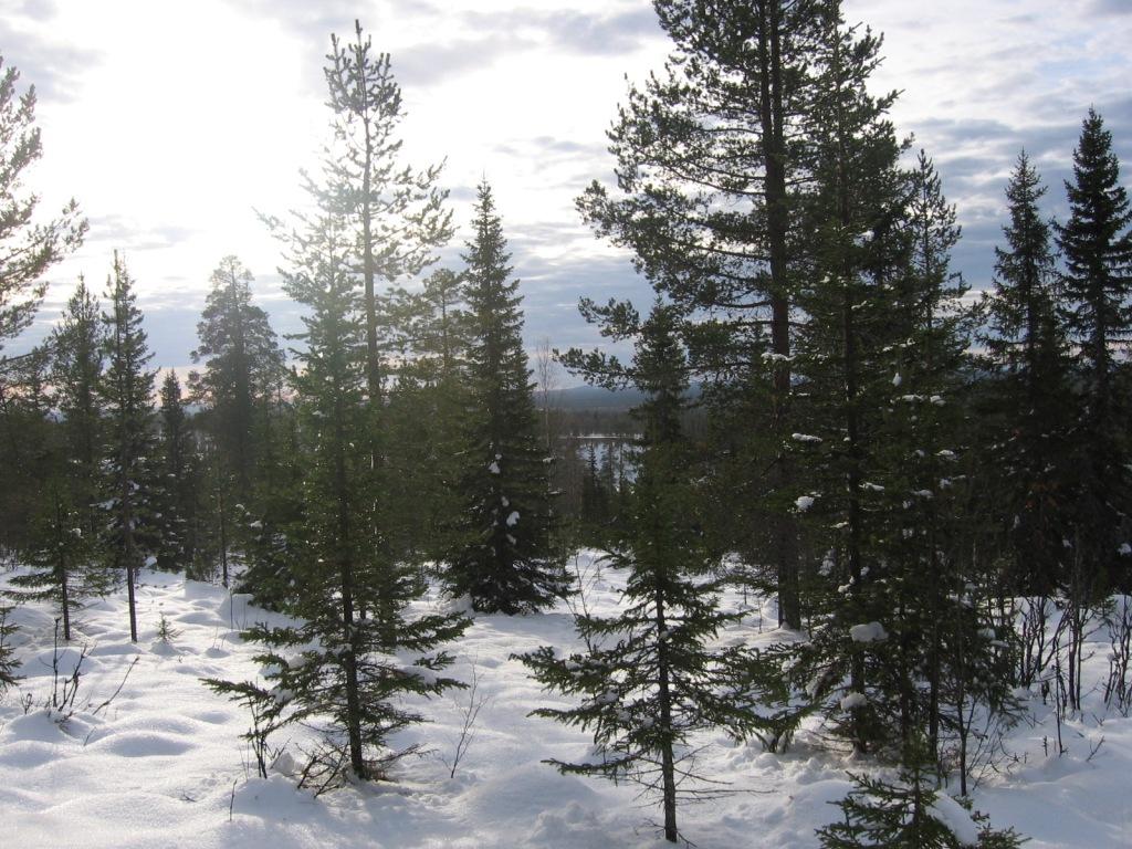 Huttujärvi Huttutunturin rinteiltä 15.10.2009