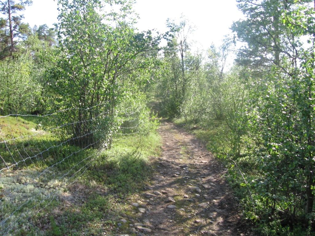 Mönkijäura Inarijoen rannoilla 27.7.2007