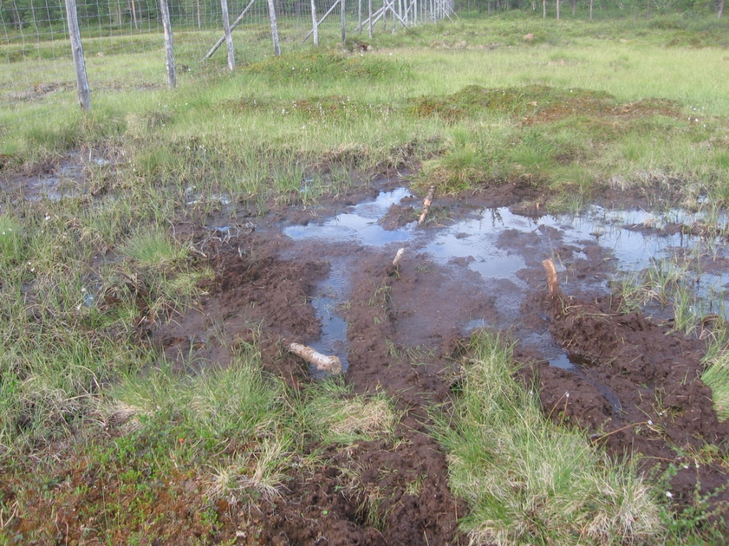 Hankala paikka suolla Kietsimän ja Vaskon välillä 30.7.2007