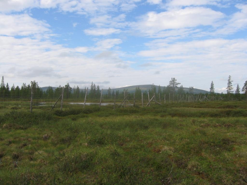 Stuorrabogoaivi ja Roavvoaivi itäpuolisilta soilta 30.7.2007