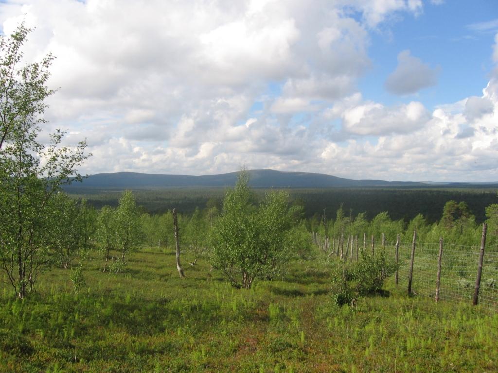 Stuorrabogoaivi ja Roavvoaivi Sankivaaralta 30.7.2007