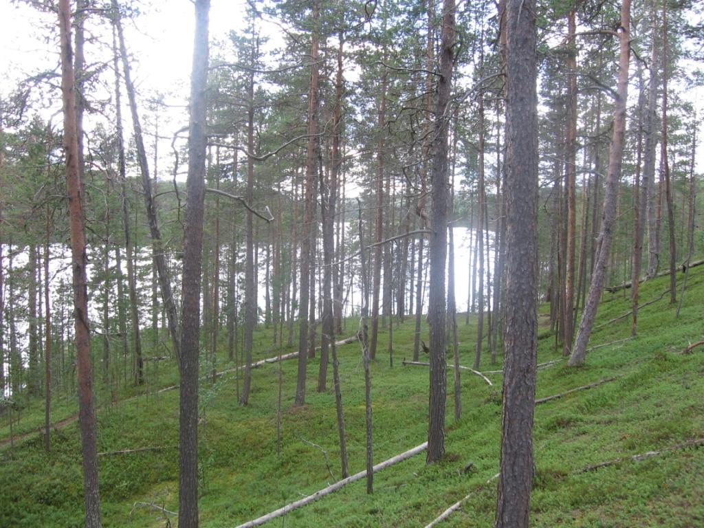 Härkäjärvi 2.8.2007