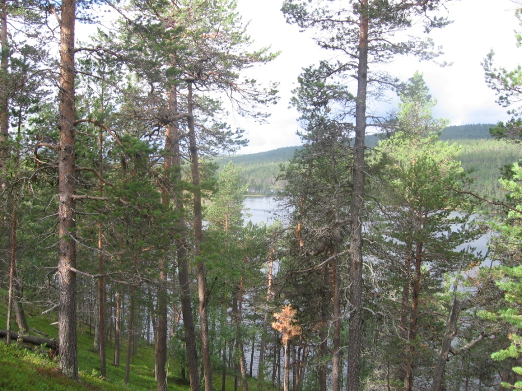 Sotkajärvi 3.8.2007