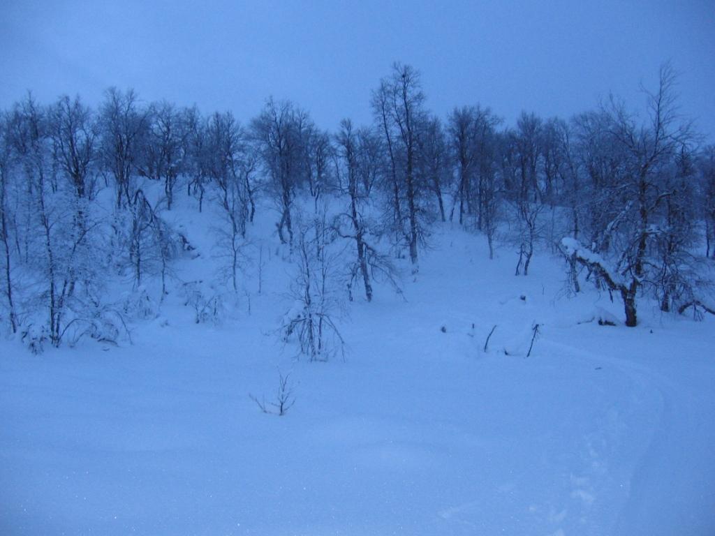 Laakso Skoahppagasoaivin eteläpuolella 20.2.2008
