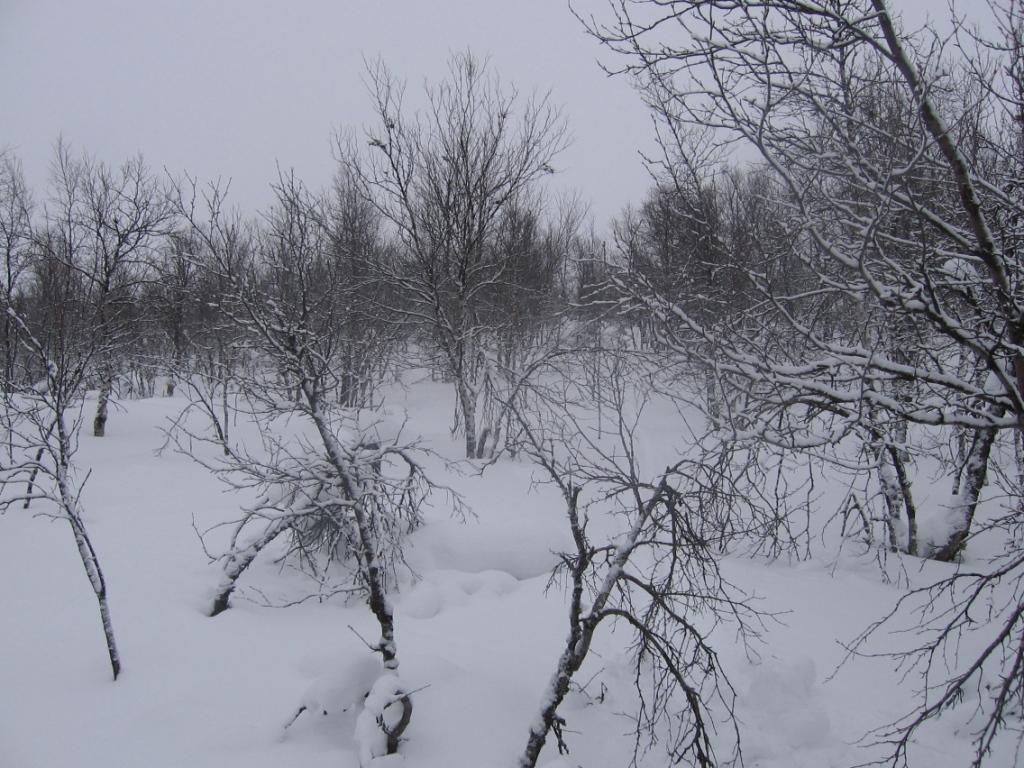Cohkavarrin pohjois/koillispuolinen sola 22.2.2008