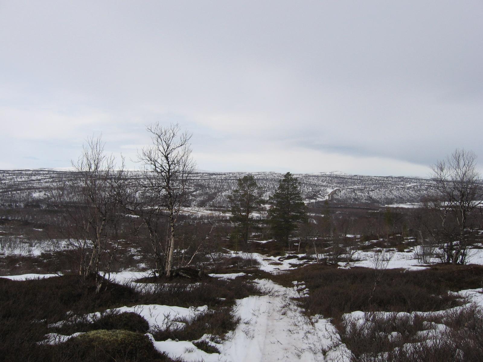 Männyt liki Pulmankijärveä 15.4.2010