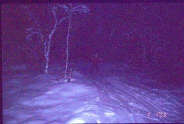 Lähestymme Vuontisjärveä Röyninkurusta 1.1.2003