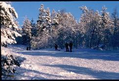 Lapset Kaunispään Allirinteessä 16.2.2003