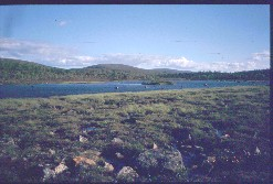 Lampi Alemmalla Honkavuomalla Tsuanjaoaivin kohdalla 29.7.2002