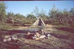 Telttapaikka Alemmalla Honkavuomalla 29.7.2002