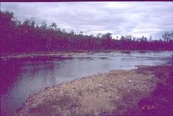 Kiellajoki 1.8.2002
