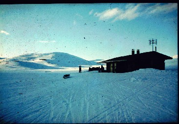 Poroelo lähestyy Pitsusjärven tupaa 24.4.1980