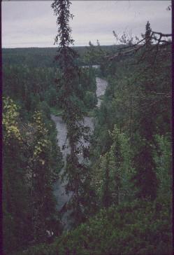 Oulankajoki, takana Savilampi 15.7.1990