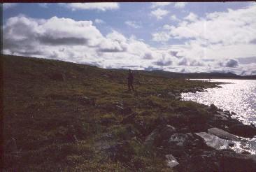 Pitsusjärven ranta 16.8.1991