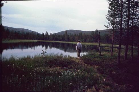 Pirttikallionvaara ja Hammaspää Hammaskodan lammelta 13.7.1994