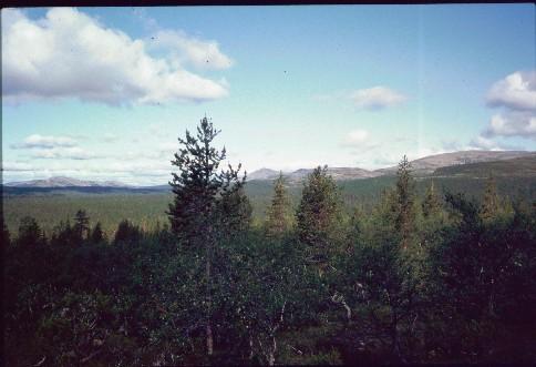 Hietapää (keskellä) ja Pirttikallionvaara kaakosta 14.7.1994