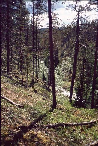 Siulaojan kanjoni Siulavaaran eteläpuolella 14.7.1994