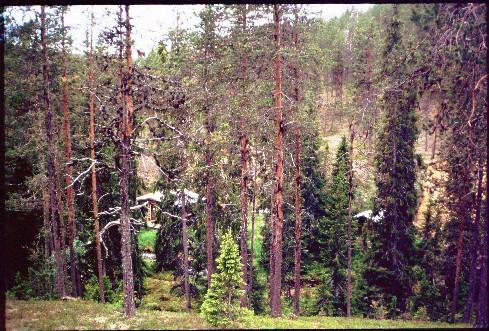 Tahvontupa ja sauna 14.7.1994