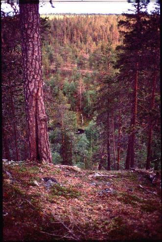 Jaurujoki Siulanruoktulta länteen 14.7.1994