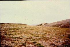 Guivin länsipuolinen sola 17.7.1998