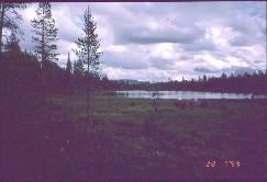 Kivipään tuvan lampi eli Lassinojan lampi, taustalla Lankopää 28.7.1999