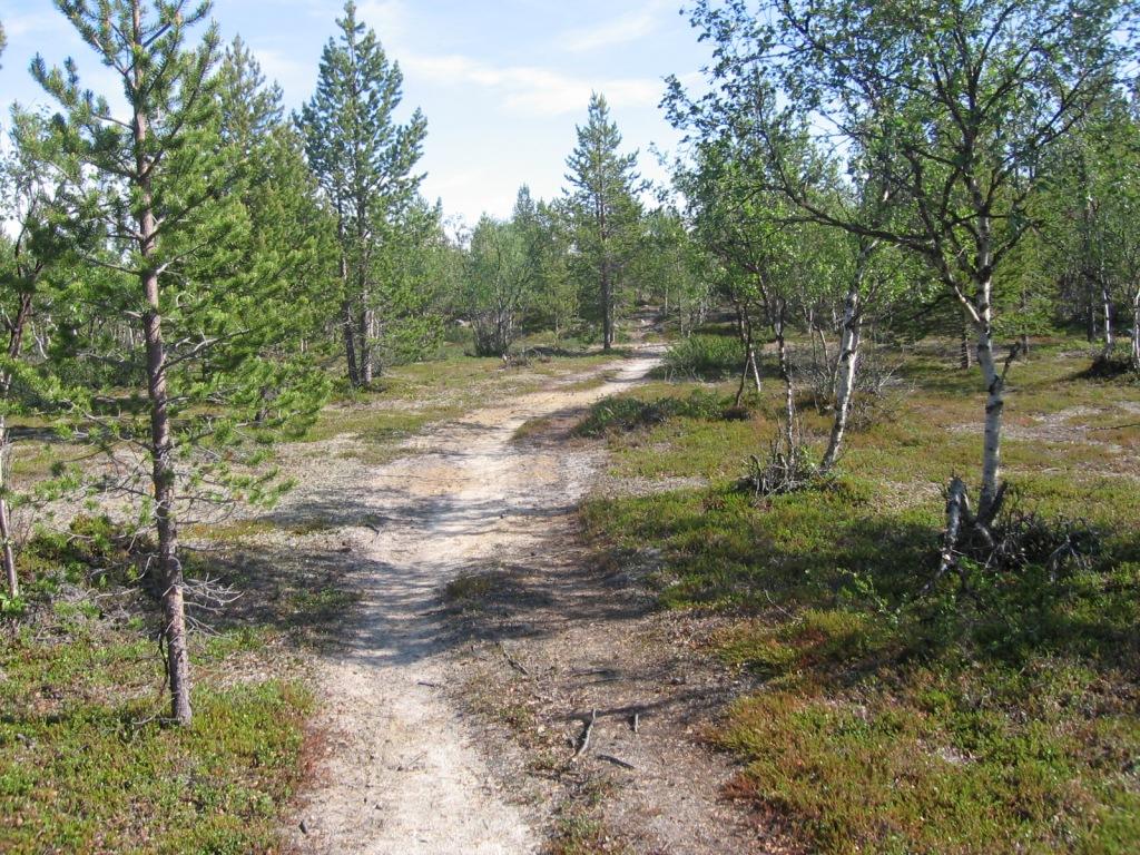 Polkua Silisjoen ja Iisakkijärven välillä 30.6.2009