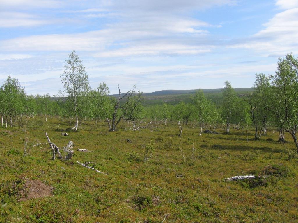 Polkua Iisakkijärven ja Huikkimajoen välillä 30.6.2009