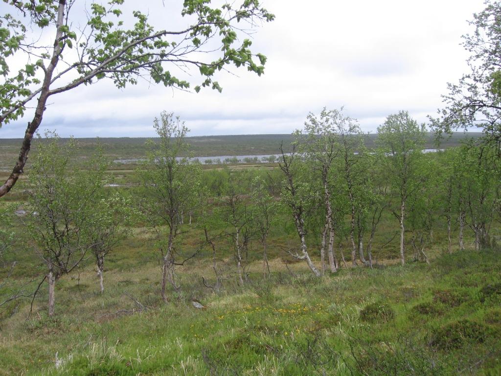 Buolbmatgeasjavri (Ylä-Pulmankijärvi) 3.7.2009