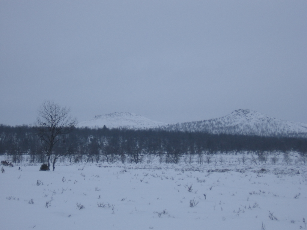 Borttacohkka kaakosta 8.3.2009