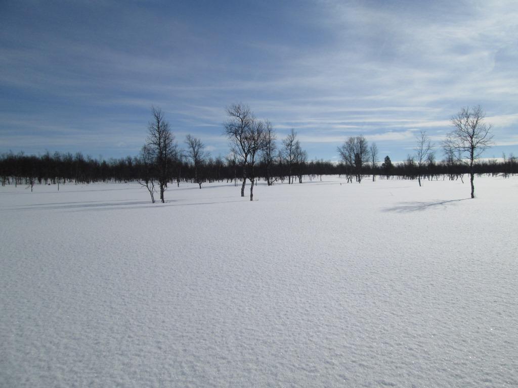 Vaskolompolon tuvalta kohti Postijoen latvaa 24.3.2014