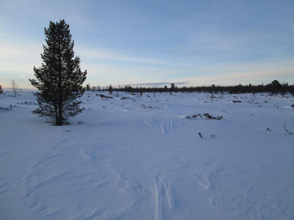 Kohti Sallivaaraa, Postijoen latvalla 26.3.2014