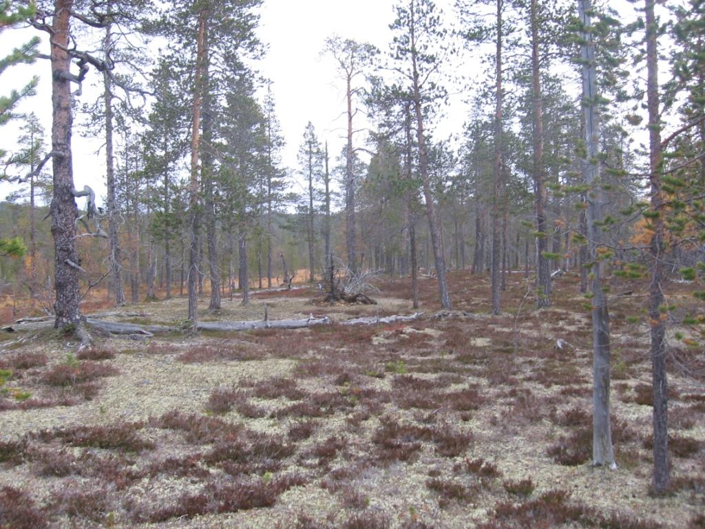 Kulasjoen varren metsiä 20.9.2008